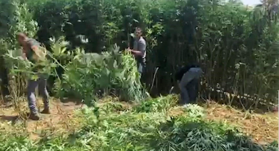 """""""גנן"""" גידל גידול בגן"""