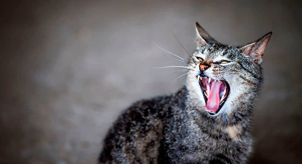פחד ואימה בבאר שבע: חתולים תוקפים תושבים