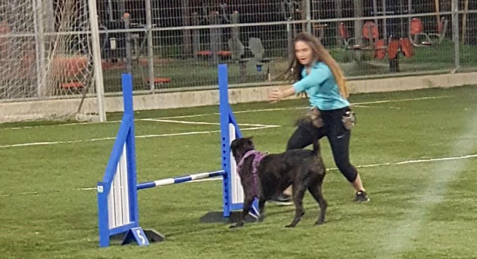 המאמן מגרמניה, הכלבים מבאר שבע